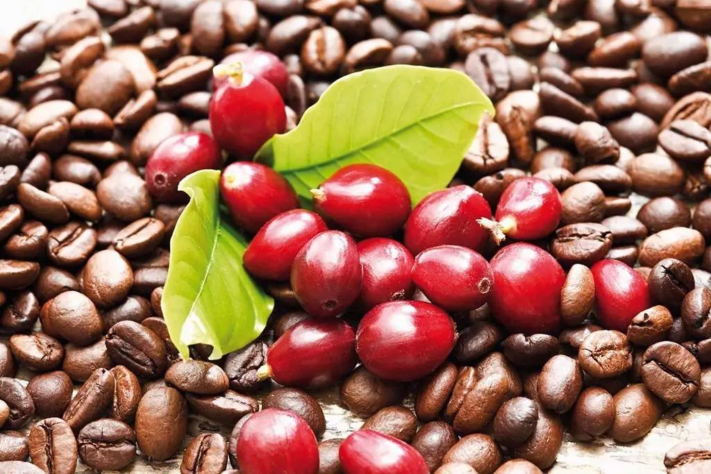 从咖啡豆到咖啡的制作过程?
